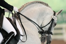 Equestrian lifestyle / by Sandra Sandoval