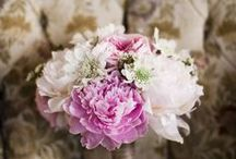 Florals: Peony / by Social Butterfly