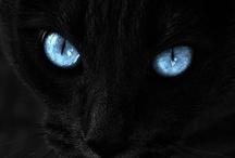 Meow / by Rebecca