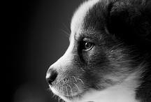 Dogs / by Noriko Kitahara