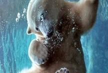 Polar bear / by Noriko Kitahara