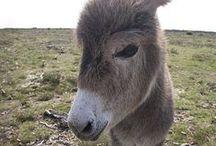 donkey / by Noriko Kitahara