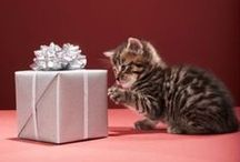 Howlidays Are Here Again! / How to have fun and be safe while celebrating the day away! / by ASPCA Pet Health Insurance