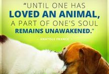 Notable, Quotable Pets / Some of our favorite quotations about pets and the humans who love them / by ASPCA Pet Health Insurance