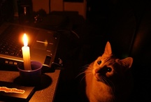 ~Love of Candles~ / by Marti West Chavez