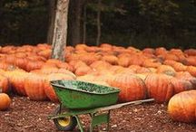 Ready For Fall / by Tessa Curtis