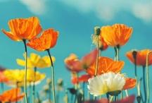 In my favorite colors / by Kim Vermeer