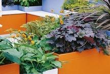 Gardening ideas / by Sydney Fulbright