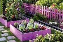 Gardens / by Kim Donohoe Ebersberger-Heil
