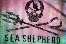 .sea shepherds. / by Jessie