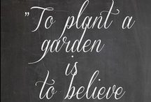 How Does Your Garden Grow? / by Christine Collins Jackson