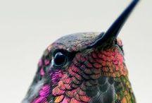 Living color / by Ian-Dawn Carpio