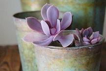 cacti & succulents / by Rachel C.