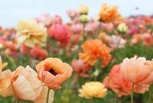 Flowers... Pertty Flowers / by Meg (Hawley) Schatz