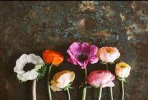 flowers / by Zoë François | ZoeBakes
