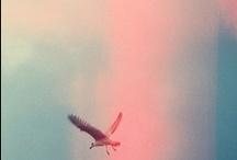 Neverland / #Neverland, #Naif / by Panic Made ByHand