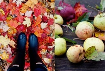 In Love With Autumn / by Dawn Schoenherz-Rigoni