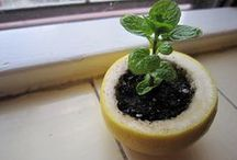 Self Sufficient (DIY) / by Sarah W