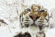 Snowy / by Amanda Livesay