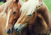 paarden voor Mona / by Emma en Mona