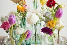 Spring / by Miranda Young