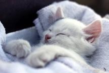Cats: Napping / by Judi Astalos-Keller