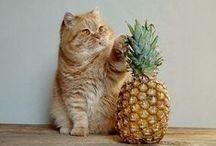 meow. / cat things. / by Amanda Waller