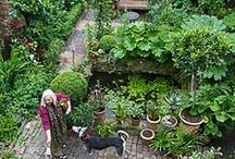 Gardens make me smile / All things garden & plant related.  Indoor & out. / by Sarah Eaton