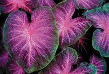 Plants / by Toshio Miyake