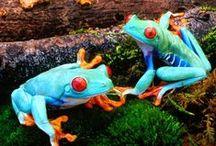 Froggies / by Candie Vaughan