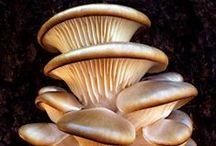 Mushroom / by Toshio Miyake