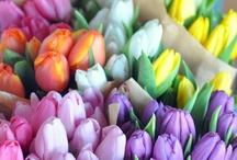 Florals / by Rachel Gray
