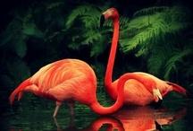 Pink Flamingo / by Candy Waldman Crawford