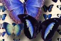Butterflies / by Candy Waldman Crawford