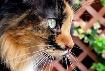 Cats / by Candy Waldman Crawford