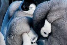 Cute & Cuddly / by Heather Goober