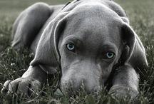 Puppy Love / by Megan Koval