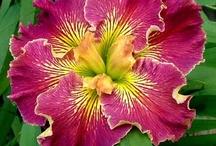 Flowers / by Roberta Stadtmiller