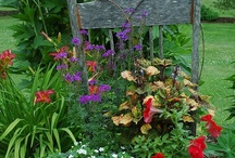 Gardening Inspiration and how to / Just great ideas and inspiration for gardening. / by Teresa Dittemore