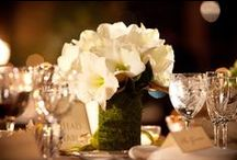 Weddings / by Tania