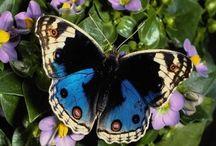 Butterflies & Dragonflies / by Sue Frazier