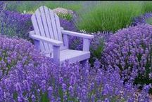Adirondack Chairs / by Sue Frazier