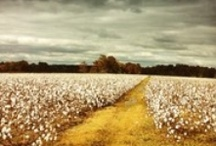 Mississippi Places / by The Clarion-Ledger