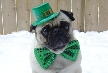 St. Paddy's Day  / by The Clarion-Ledger