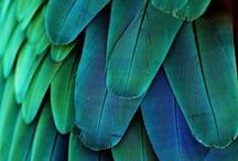 Feathers / by Sue Frazier