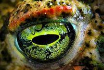 Eye C U / by Jamie DeMonaco