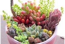 Succulents, flowers & trees / I am succulent obsessed!!  I have many many dish gardens filled with many many different kinds!!  / by Leslie Harvey