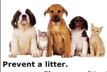 Spay and Neuter / by National Mill Dog Rescue