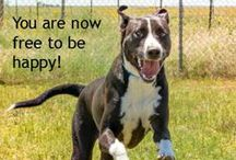 NMDR Dog Quotes / by National Mill Dog Rescue