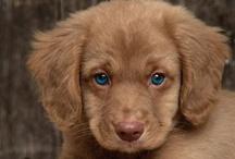 Puppy Love / by Glenda Roslund